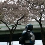 さくらまつり(浪速神社) 2016年4月3日